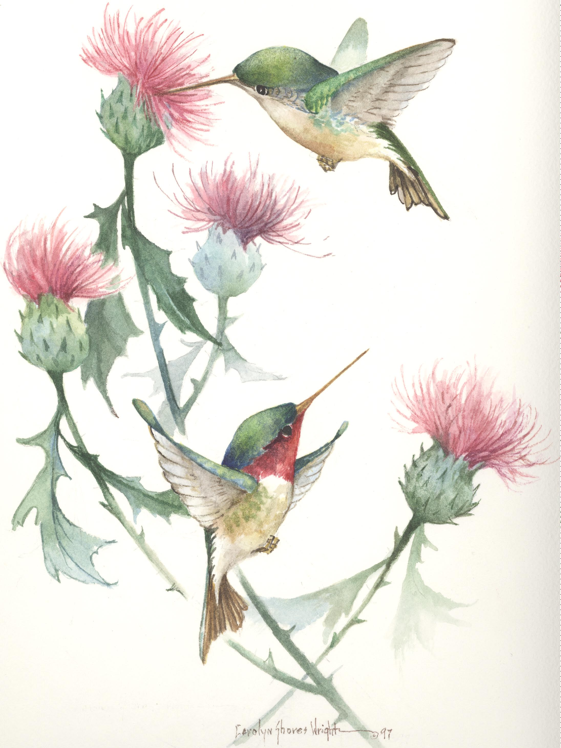Hummingbirds And Flowers Painting